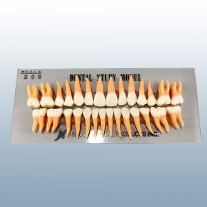 B2-306 - 28 Anatomical Tooth Set