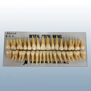 B3-305 - 32 Anatomical Tooth Set