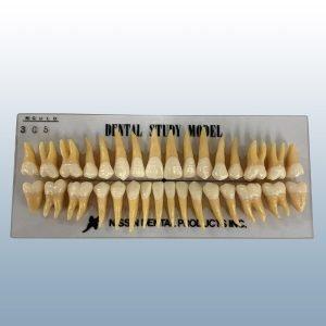 B3-305 - 32 Anatomical Tooth Set