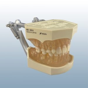 I6D-400J - Mixed Dentition
