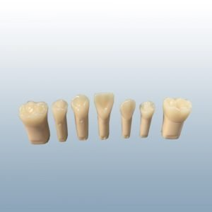 A22AN-200 - Composite Resin Teeth w/ Hollow Pulp