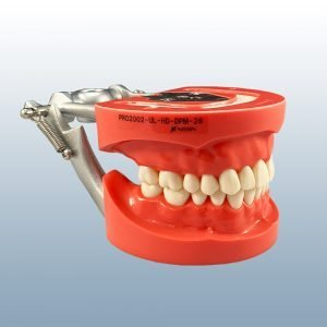D81SDP-200 - 28 Teeth, Hard Tissue