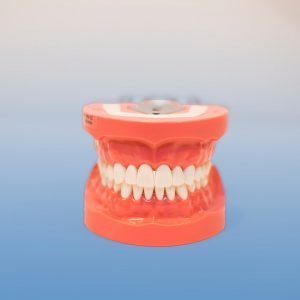 D91SDP-200 - 32 Teeth, Hard Tissue