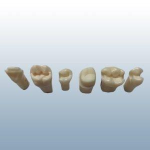 A21AN-200 - Pre-Prepared Teeth