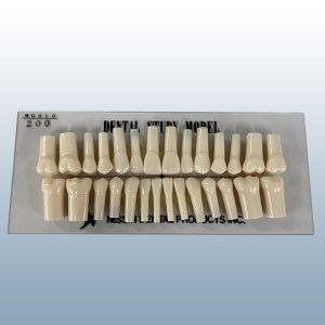 200 Series - Set of 28 Teeth