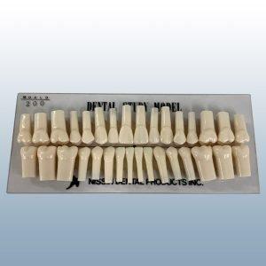 200 Series - Individual Teeth