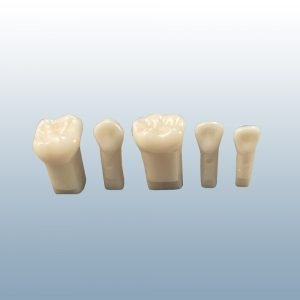 D75 Series - Individual Replacement Teeth