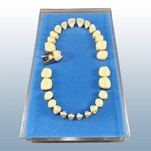 B9-500D - Anatomically Rooted Metal Teeth