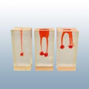 S6 Set - Endodontic Blocks (w/ no crown, reservoir near apex)