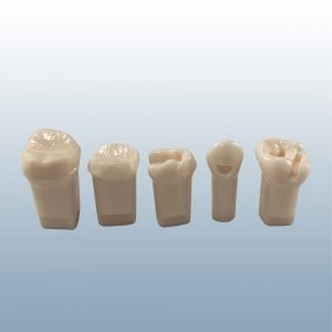 A7-920 - Pediatric Prepared Teeth